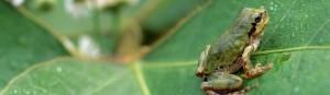 foto kikker ontwerp ecologie
